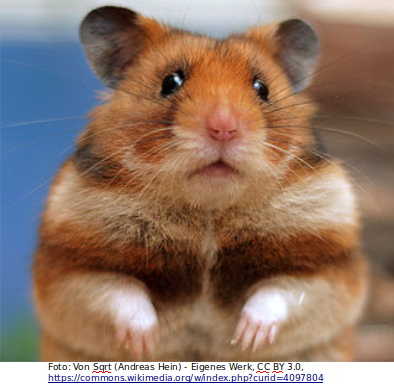 Hamsterkäufe versus Kanban